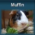 Meerschweinchen McMuffin