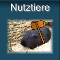 Meerschweinchen als Nutztiere