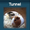 Tunnel für Meerschweinchen