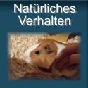 Natürliche Verhaltensweisen von Meerschweinchen