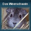 Das Weerschwein