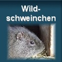 Wildmeerschweinchen