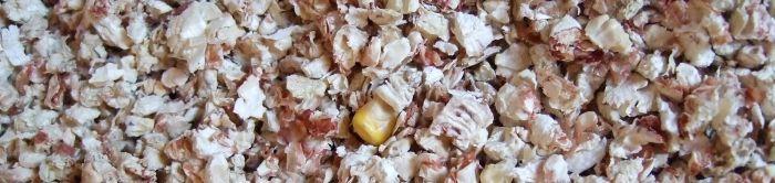 Maiseinstreu im Ötti-Test