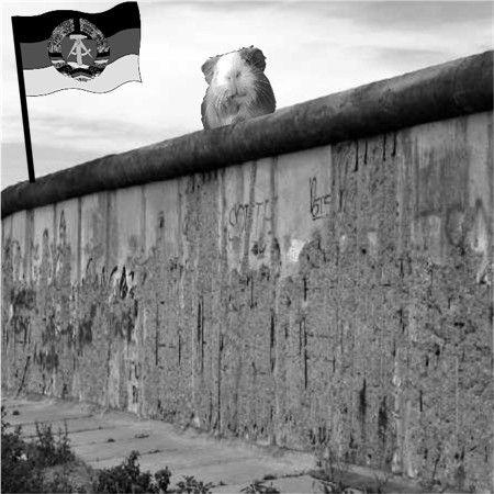 Meerschweinchen gab es in der DDR nicht