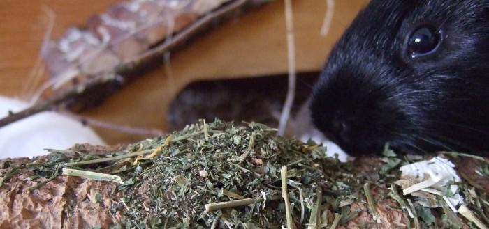 Meerschweinchen Ninja testet den Natur-Mix getreidefrei