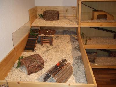 Anbau des Meerschweinchen-Geheges