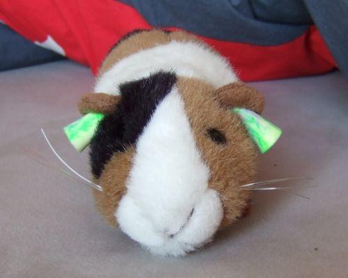 Meerschweinchen brauchen Ohr-Schutz