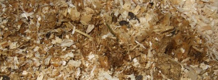 aufgequollene Strohpellets