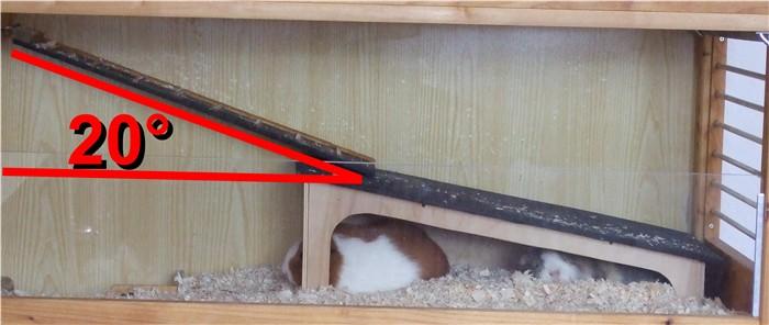 Rampen Winkel für Meerschweinchen