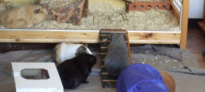 Rampe ins Schweineheim