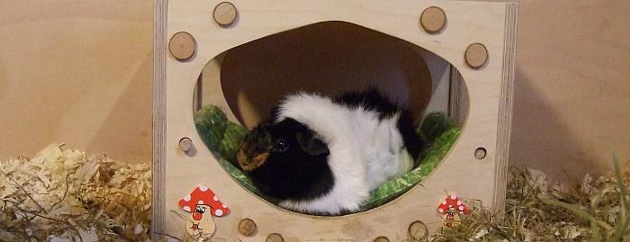 schlafende Schweineprinzessin