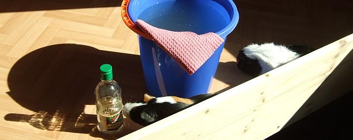 Meerschweinchen helfen bei der Reinigung