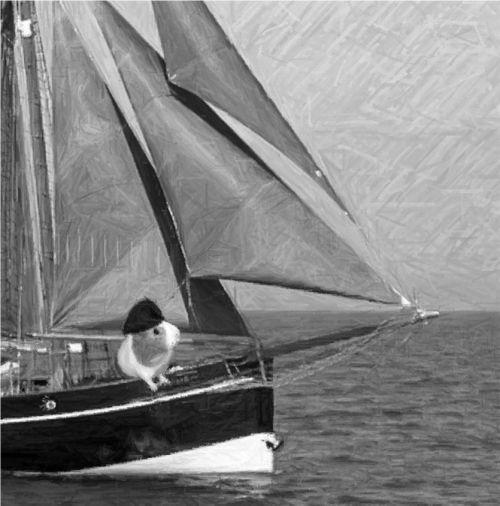 Meerschweinchen auf Segelschiff