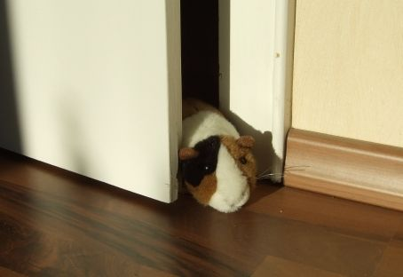 Meerschweinchen in Tür