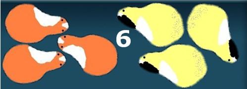 6 Meerschweinchen