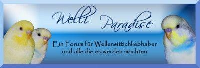 Im Welli Paradise Forum geht es rund um die bunte Welt der Wellensittiche, Nymphensittiche und auch andere Haustiere.