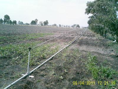 Siyca s a de c v sistema de riego por aspersi n for Proyecto de riego por aspersion