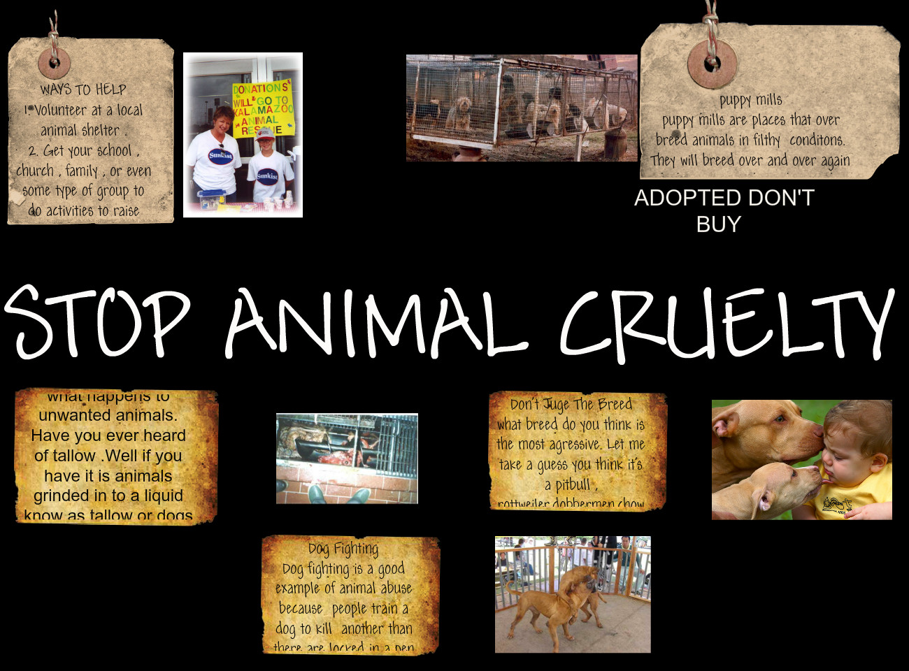 Prevention of cruelty towards animals essay