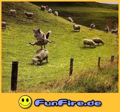 Funfire.De