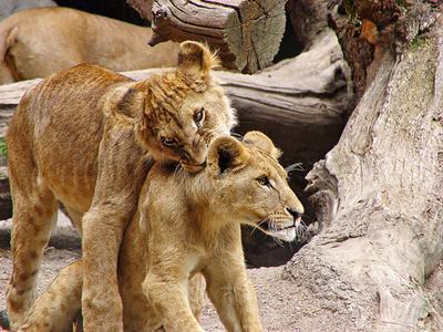 sollten tiere gleichen rechte haben menschen