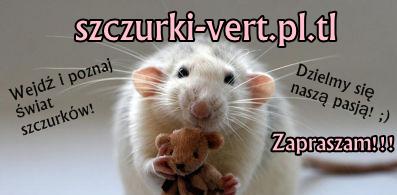 szczurki-vert