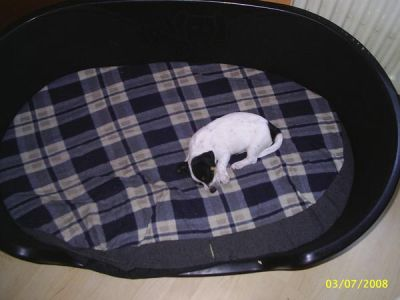 jack russel terrier tairyn mein leben. Black Bedroom Furniture Sets. Home Design Ideas