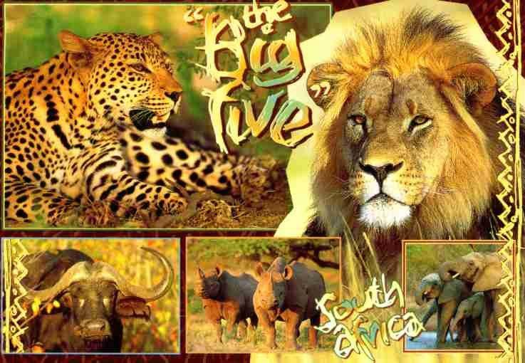 The south star the big five for Big 5 fishing license