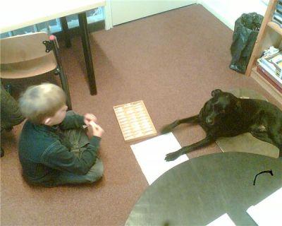 Über therapie mit tieren