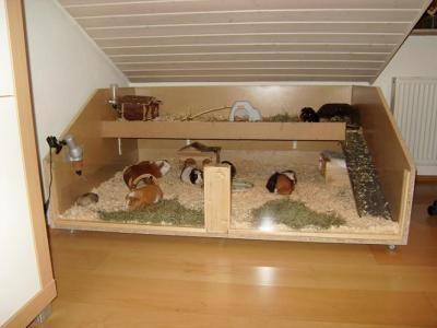 Meerschweinchenkäfig Bauen