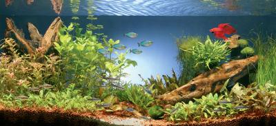 La acuariofilia 1 tipos de acuarios for Peces ornamentales para acuarios