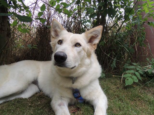 Silvester-Angst Beruhigungsmittel für Hunde