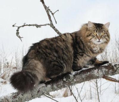 Por qu los gatos lamen a las personas? La explicacin