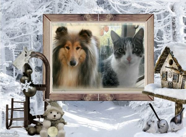 An den Beitrag angehängtes Bild: http://img.webme.com/pic/v/vondercollieburg/Winter%20-%202zxDa-6WNre%20-%20normal.jpg