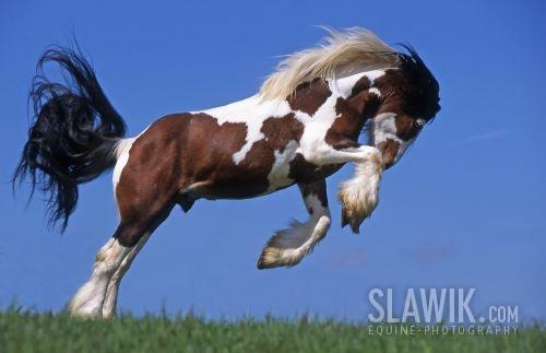 echte pferde kaufen