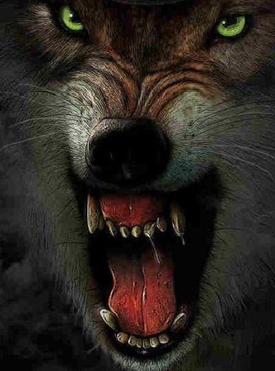 злой волк фото на телефон требуется