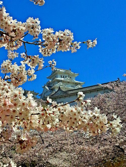 Himeji og Kyoto