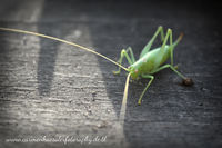 grasshopper is watching you