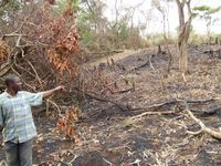 Slash and burn farming system
