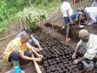 Building tree nurseries