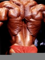 Ken Flex Wheeler
