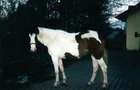 Pferde-Grüße an Josys Mama