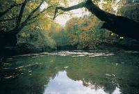 bolu göl manzarasi