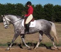 Aurum Performance Horses