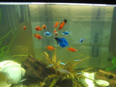 Isihof b ntberg fische for Aquarium fische im teich
