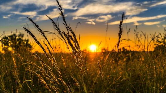 Aufgeblühte Gräser auf einer Wiese mit Sonnenuntergang im Hintergrund. Pixabay.com Foto (2391348): Felix Mittermeier