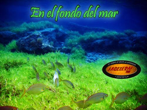 En el fondo del mar - Fotos fondo del mar ...