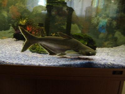 El acuario en mi casa la alimentaci n de los peces for Cria de peces en casa