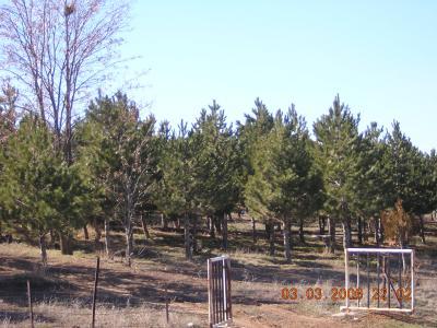 Atatürk Ormanı