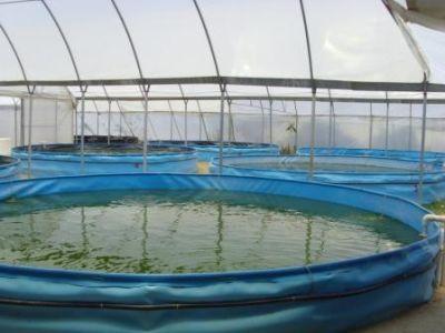 Alevinos del valle org agroacuicola manejo t cnico for Crianza de truchas en estanques
