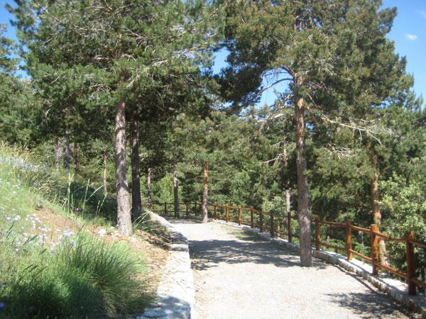 Visita jardin bot nico for Como ir al jardin botanico